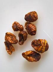 Bild von Artikel Seidenspinnerpuppen 100g Beutel