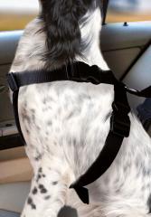 Bild von Artikel Auto-Hundegeschirr Gr. S